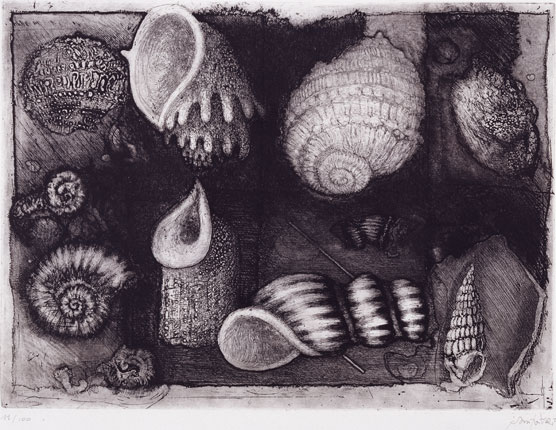 Sei in home > opere > ombre fossili (1)